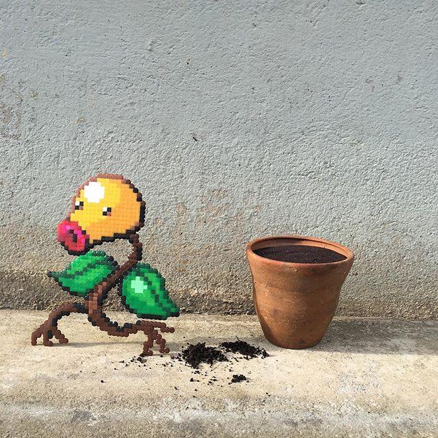 Plant - Pappas Pärlor